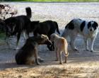 Νόμος φέρνει μεγάλες αλλαγές για κατοικία και φροντίδα αδέσποτων ζώων