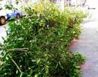 Τι συμβαίνει με τα δέντρα στις γειτονιές; Η «ιδέα» της Θεσσαλονίκης, η περίπτωση του ΠΕΙΡΑΙΑ και οι ΑΠΟΚΛΕΙΣΤΙΚΕΣ δηλώσεις στην ΚΟΙΝΩΝΙΚΗ του Αντιδημάρχου Πρασίνου