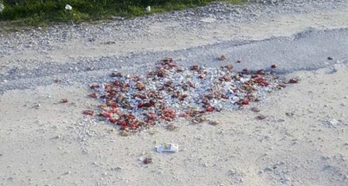 «Μπάλωσαν» λακκούβες σε δρόμο με σπασμένα πιάτα & γαρύφαλλα (φωτο)