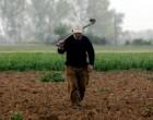 Παραχωρούνται χωράφια με 5 ευρώ το χρόνο -Οι δικαιούχοι