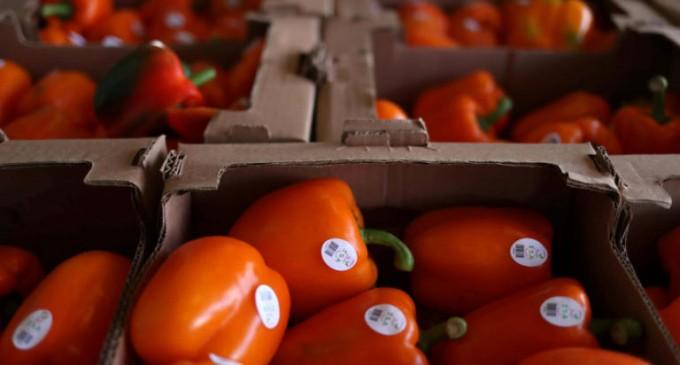 Φαρμάκι οι πιπεριές από την Αλβανία – Κατασχέθηκαν 700 κιλά στον Πειραιά