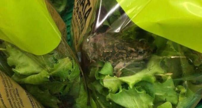 Βάτραχος σε σαλάτα: Πανηγύρι στο twitter