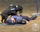 Σκύλος της αστυνομίας κάνει… καρδιακές μαλάξεις και γίνεται viral!