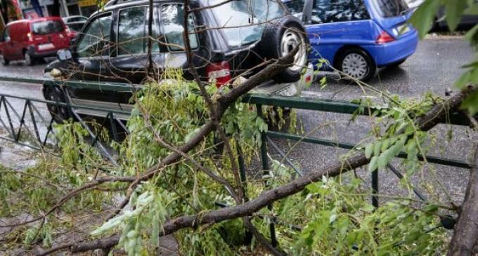 131 κλήσεις στην Πυροσβεστική για πεσμένα δέντρα το τελευταίο 24ωρο