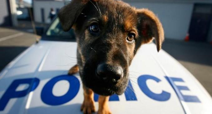 Δέκα φορείς ζητούν Αστυνομία Ζώων από την ΕΛ.ΑΣ.