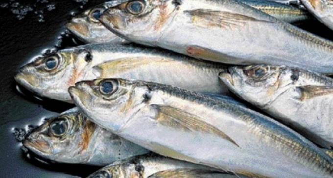 Κατάσχεση ακατάλληλων αλιευμάτων στην λαϊκή αγορά