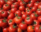 Δέσμευση 1,2 τόνων ντομάτας σε επιχείρηση του Πειραιά
