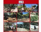 Εργασίες αποψίλωσης στη Φρεαττύδα και στα Βοτσαλάκια
