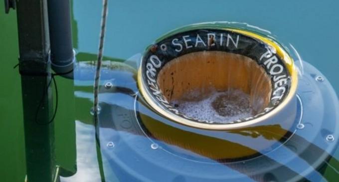 Ο Δήμος Παλαιού Φαλήρου στηρίζει δράσεις  αειφορίας και προστασίας της θαλάσσιας ζωής
