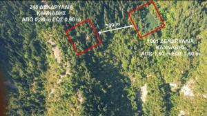 Karditsa-xasisofyteies-ena