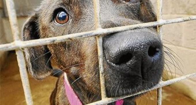 ΔΙΚΕΠΑΖ: Γνωρίστε τα προς υιοθεσία αδέσποτα σκυλάκια!