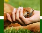 «Ημέρα Υιοθεσίας Αδέσποτων Ζώων Συντροφιάς»