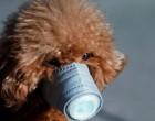 Σκύλος με κορονοϊό! Βρέθηκε θετικός