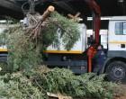 Ο Δήμος Πειραιά ανακύκλωσε τα δέκα φυσικά έλατα που στολίστηκαν τα Χριστούγεννα