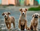 Αναρτήθηκε το έντυπο βεβαίωσης μετακίνησης για σίτιση αδέσποτων ζώων