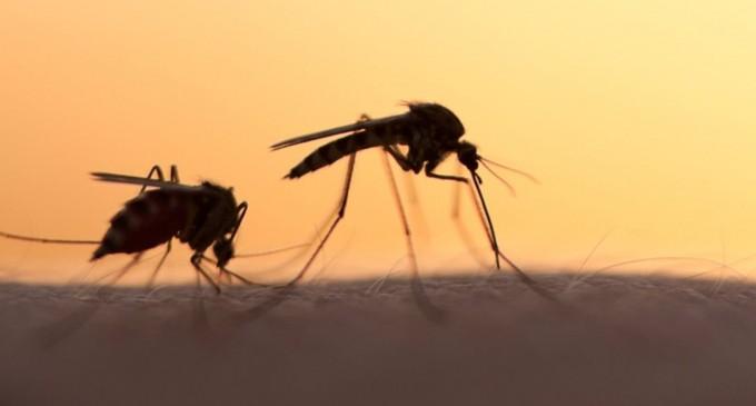 Συνεχίζεται το Πρόγραμμα καταπολέμησης κουνουπιών της Περιφέρειας Αττικής στην Περιφερειακή Ενότητα Πειραιά