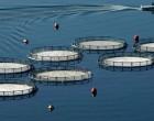 Σαλαμίνα: Δικαίωση του δήμου από το ΣτΕ για την οστρακοκαλλιέργεια στην Ψιλή Άμμο