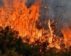 Πυρκαγιά στην Αγ. Βαρβάρα Ηρακλείου-Δυσκολεύουν την πυρόσβεση δυνατοί άνεμοι