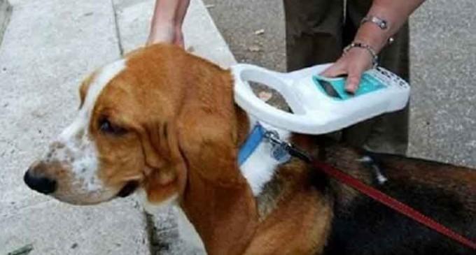 Ηλεκτρονική σήμανση δεσποζόμενων ζώων στον δήμο Βριλησσίων