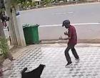 Μεθυσμένος τύπος τρόμαξε σκυλιά με ψευτοκινήσεις κουνγκ-φου (βίντεο)