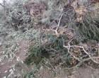 Υπηρεσία αποκομιδής κλαδιών από τον Δήμο Σαλαμίνας και μείωση κόστους ποσού των 45.400€