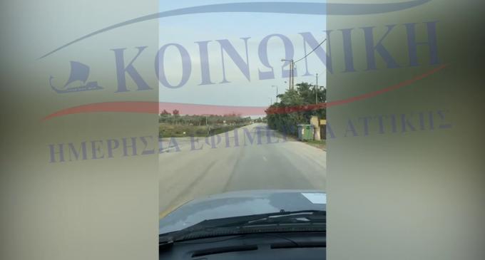 Απίστευτο: Περιφερειακή Σύμβουλος παρουσιάζει έργο του Πατούλη… ενώ οδηγάει! (βίντεο) Το είδαμε και αυτό!