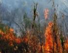 Μεγάλη πυρκαγιά στην Κερατέα -Τι λέει ο Δήμαρχος