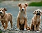Ενέργειες του Δήμου Περάματος για τη σίτιση των αδέσποτων ζώων συντροφιάς