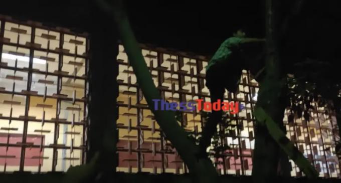 Κορωνοπάρτι στο ΑΠΘ: Φοιτητές σκαρφαλώνουν σε δέντρα και ξεφαντώνουν μέχρι πρωίας – Δείτε βίντεο