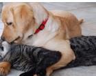 Ειδικά φτυαράκια σε κατοίκους του Πειραιά για τους σκύλους (απόφαση)