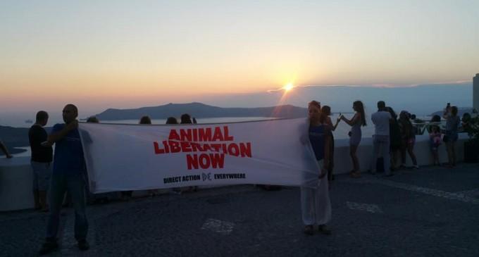 Γίναμε είδηση: Ιδιοκτήτες γαϊδουριών δέρνουν ακτιβιστές στη Σαντορίνη