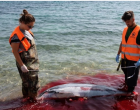Η θάλασσα βάφτηκε κόκκινη: Μαζικές δολοφονίες θαλάσσιων θηλαστικών στο Αιγαίο