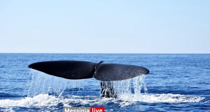 Απίστευτο: Φάλαινα – φυσητήρας μήκους 20 μέτρων στη Μάνη!
