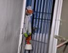 Κορωνοϊός: Υγειονομικές «βόμβες» τα κρατητήρια – Τι καταγγέλλουν οι αστυνομικοί