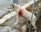 Μαχαίρωμα σκύλου στη Νίκαια- Κεραμέως: Ο δράστης δεν είναι εκπαιδευτικός