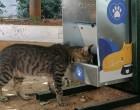 Δήμος Αθηναίων: Η πλατφόρμα και τα δωρεάν σεμινάρια για εθελοντική περισυλλογή και φροντίδα αδέσποτων  ζώων