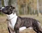 Φρίκη στην Πετρούπολη: Νεκρός δεσποζόμενος σκύλος που χτυπήθηκε από κουκουλοφόρο με βέλος!