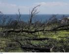 Νέες αποκαλύψεις για το Μάτι: Ομολόγησε ότι η Πυροσβεστική γνώριζε για νεκρούς και το έκρυψε από τον Τσίπρα