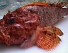 Αλιευτικοί έλεγχοι στην Ιχθυόσκαλα Κερατσινίου
