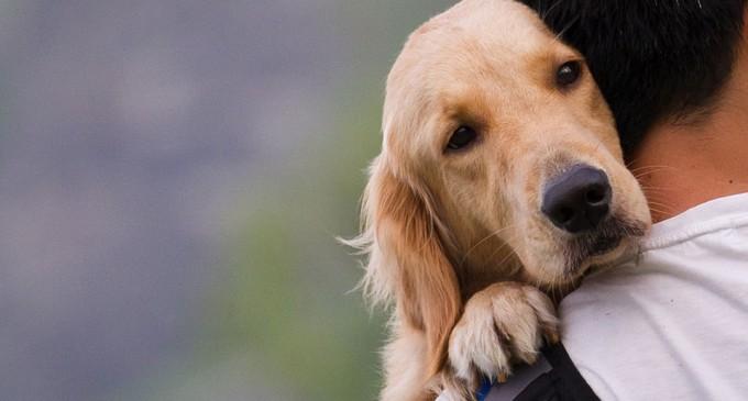 Απαραίτητη η επαναδιατύπωση του νομοσχεδίου που αφορά στα ζώα συντροφιάς