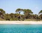 Προτάσεις του Δήμου Μαραθώνος για το πευκοδάσος του Σχινιά
