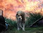 Ο Δήμος Βριλησσίων συγκεντρώνει είδη πρώτης ανάγκης για την περίθαλψη των τραυματισμένων ζώων στις πυρόπληκτες περιοχές