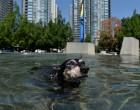 Καναδάς: Πρωτοφανές κύμα καύσωνα – Στους 49,5 βαθμούς Κελσίου ο υδράργυρος – Πάνω από 230 νεκροί