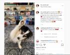 Τα viral της ημέρας: Η κλέφτρα γάτα, ο σκύλος- ινφλουένσερ και ένα κατοικίδιο, αλλιώτικο από τ' άλλα