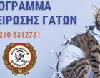 Νέο πρόγραμμα Στειρώσεων για γάτες στο Δήμο Αιγάλεω