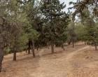 Προληπτικά μέτρα πυροπροστασίας από τον Δήμο Νίκαιας-Αγ.Ι. Ρέντη