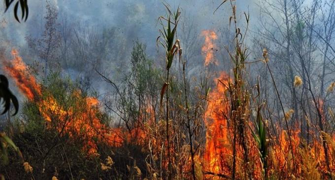 Β. Εύβοια: Απειλούνται τα χωριά Γαλατσώνα, Αβγαριά, Ασμίνι – Κοντά στην Ιστιαία η φωτιά