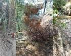 Συνεχίζονται με εντατικούς ρυθμούς οι καθαρισμοί ρεμάτων σε όλο το εύρος της Περιφέρειας Αττικής