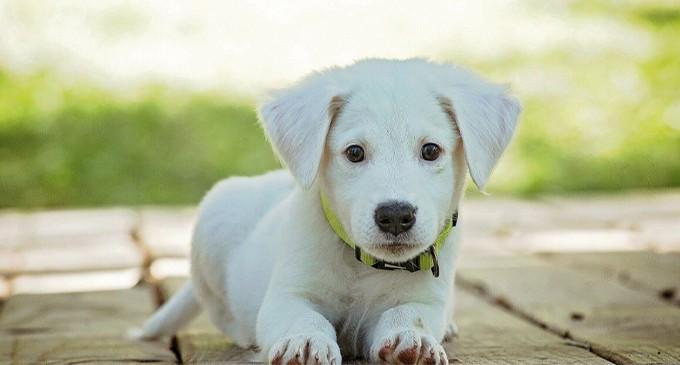 ΠΕΣΥΔΑΠ: Τοποθετείται για το νέο νομοσχέδιο για ζώα συντροφιάς – Σημαντική η παρέμβαση Γουρδομιχάλη στο ΔΣ της ΚΕΔΕ